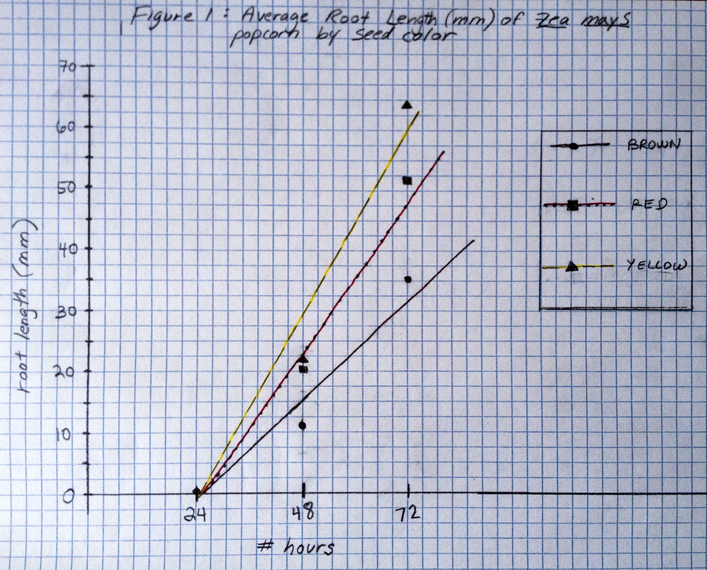Zea mays graph